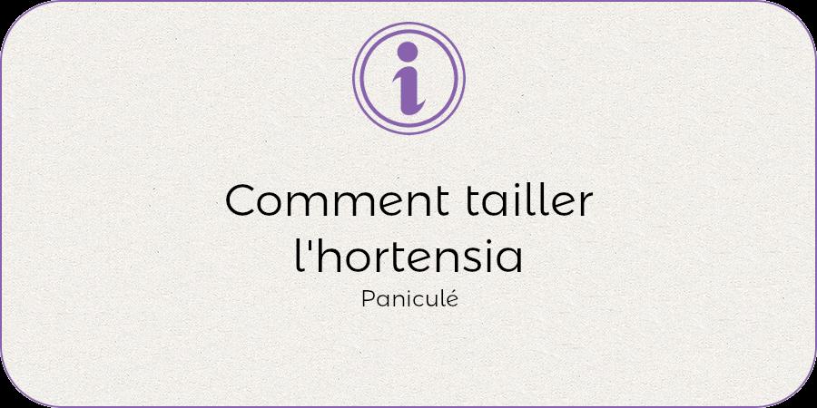 Comment entretenit l'hortenisa panuculata !