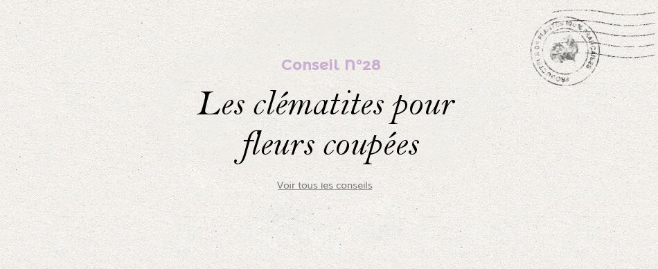 28 - Les clématites pour fleurs coupées