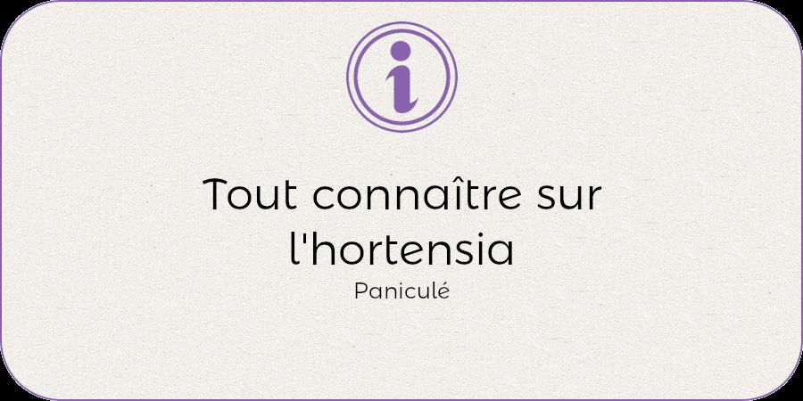 Tout connaitre de l'hortenisa panuculata !