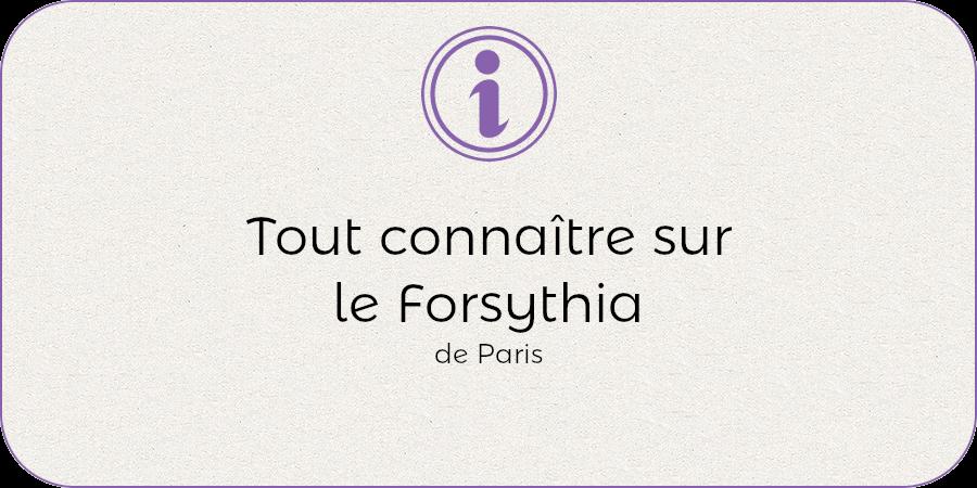 Tout connaitre sur le forsythia !
