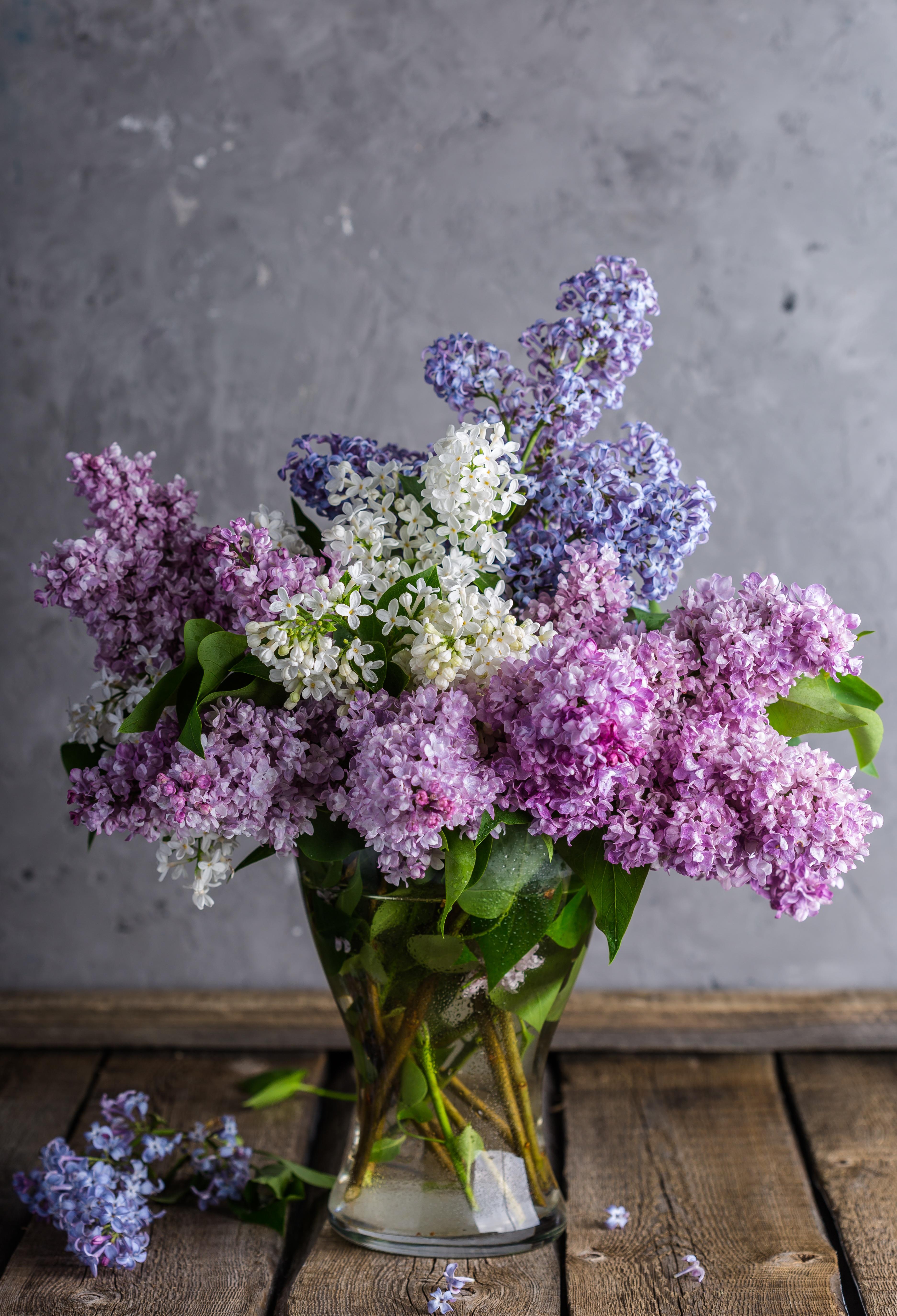 lilac-1914124.jpg