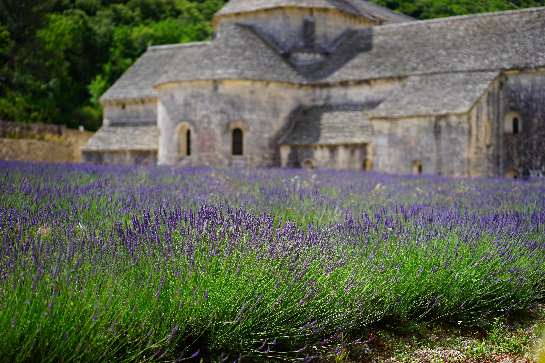lavender-1275377.jpg