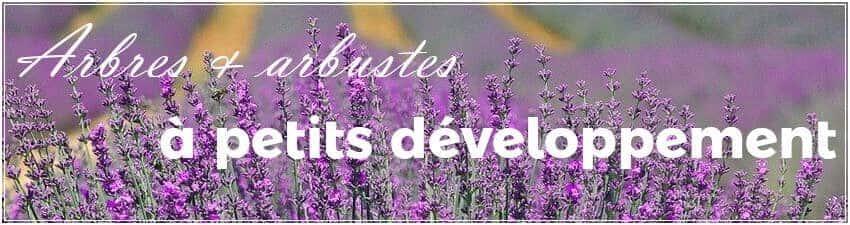 Arbres et arbustes à petits développement