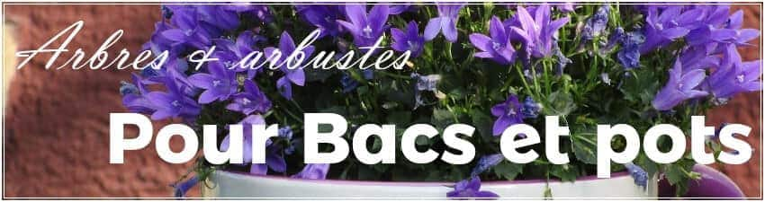 Arbres et arbustes pour bacs et pots