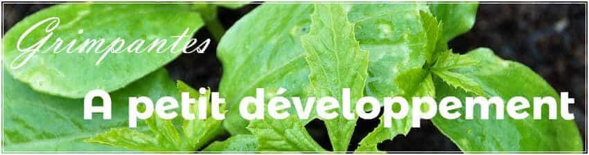 Plantes grimpantes à petit développement