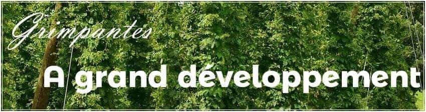 Plantes grimpantes à grand développement