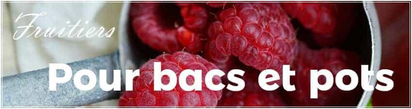 Arbres fruitiers pour bacs et pots