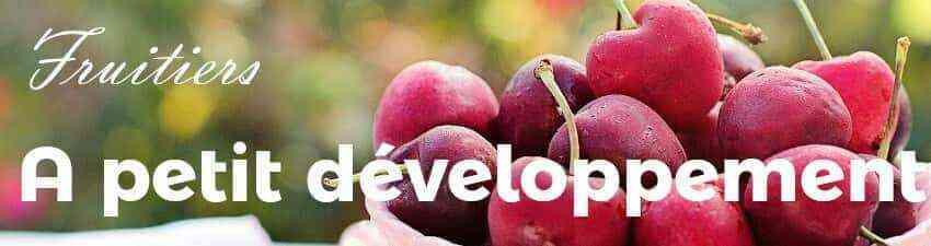 Arbres fruitiers à petit développement