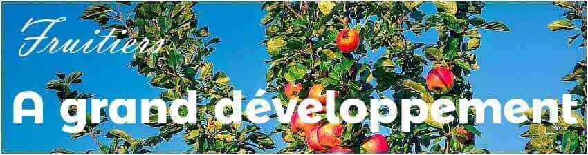 Arbres fruitiers à grand développement