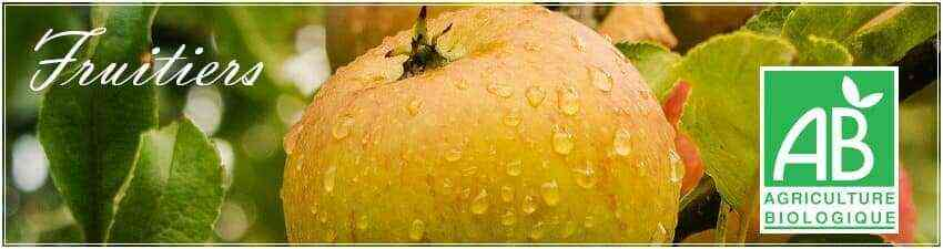 Arbres fruitiers agriculture biologique