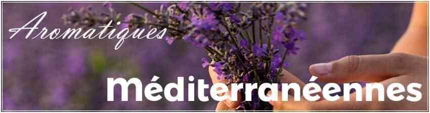 Aromatiques méditerranéennes