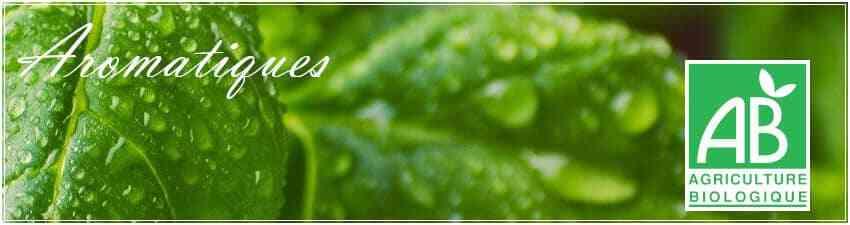 Aromatiques agriculture biologique