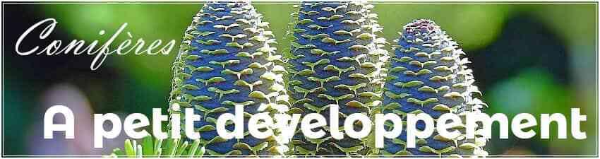 Conifères à petit développement