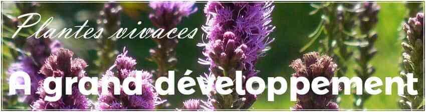 Plantes vivaces à grand développement