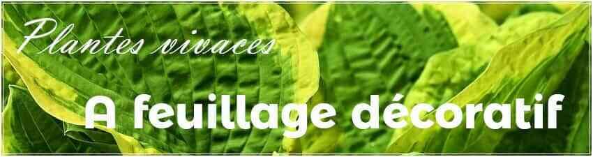 Plantes vivaces à feuillage décoratif