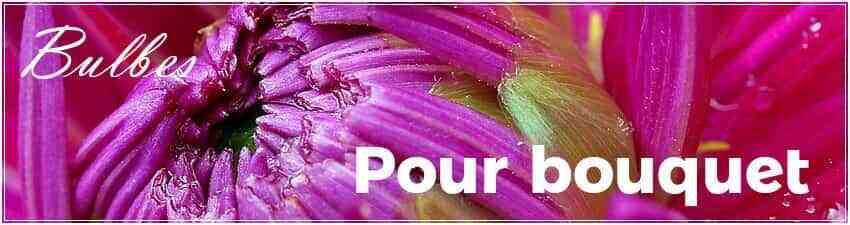 Bulbes pour bouquet
