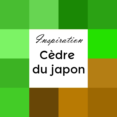Cryptomeria ou cèdre du Japon