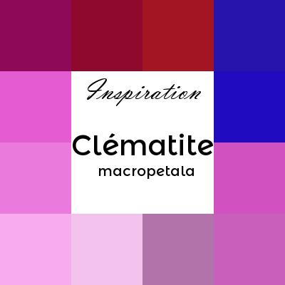 clématite macropetala