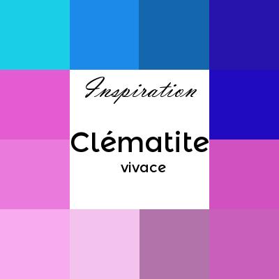 clématite vivace ou clématite integrifolia