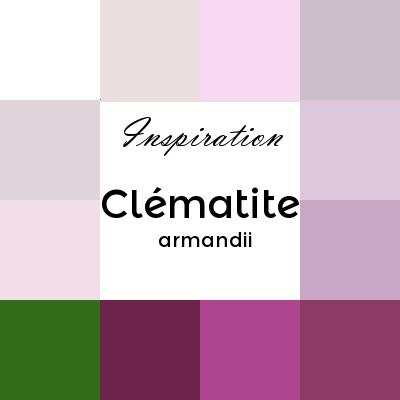 clématite armandii ou clématite d'Armand