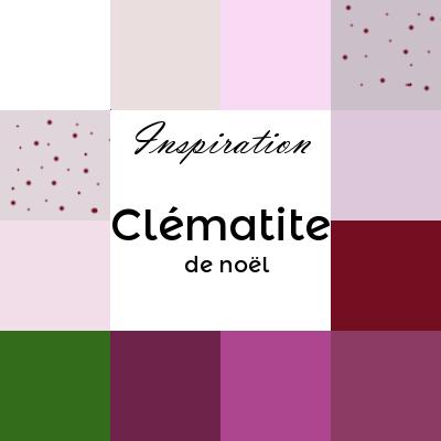 clématite de noël ou clématite cirrheuse