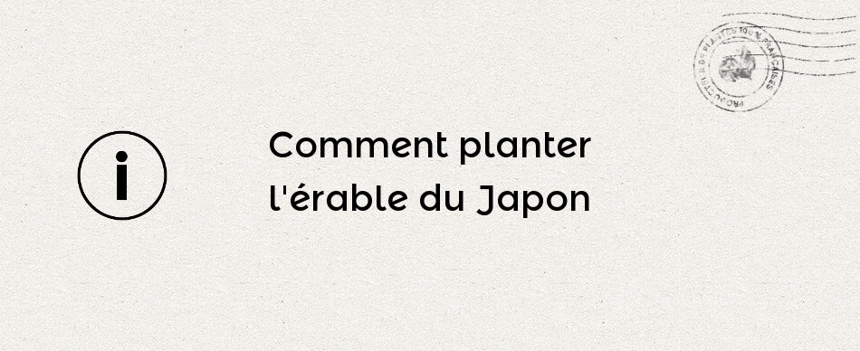 Comment planter l'érable du Japon