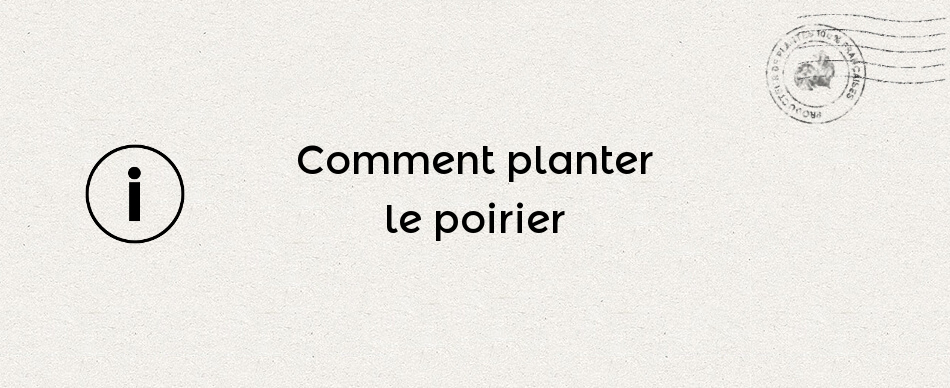 Comment planter le poirier