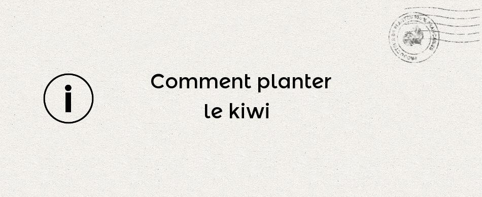 Comment planter le kiwi