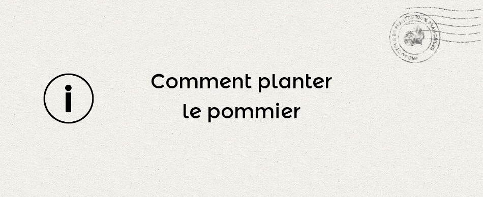 Comment planter le pommier
