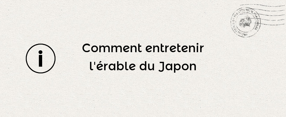 Comment entretenir l'érable du Japon