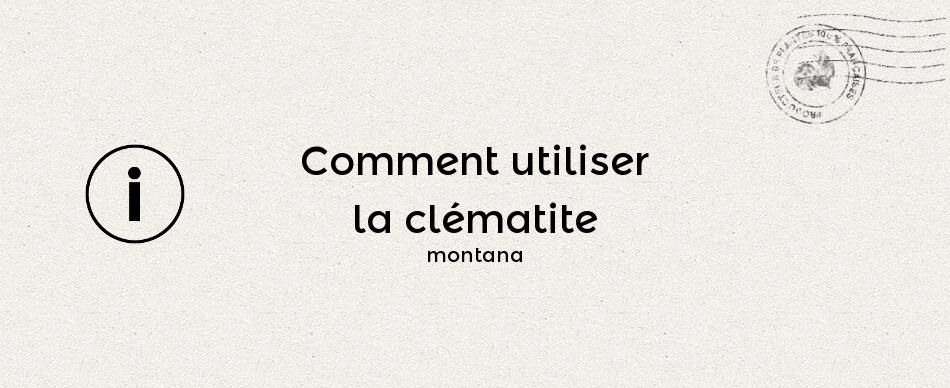 Comment utiliser la clématite montana ?