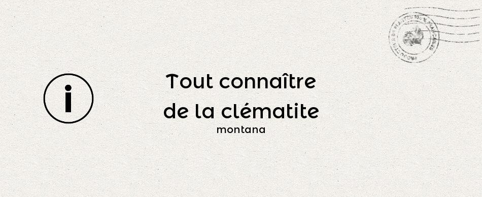 Tout connaître de la clématite montana