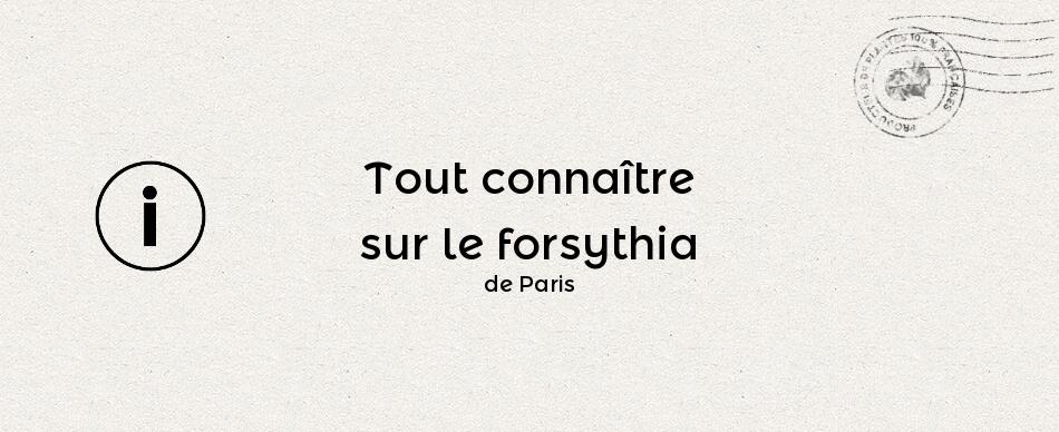 Tout connaître sur le forsythia de Paris