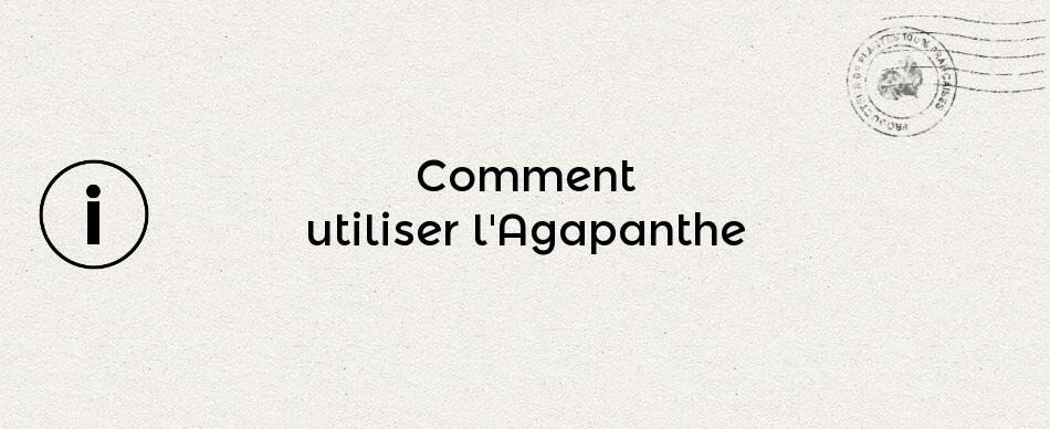 Comment utiliser l'Agapanthe ?