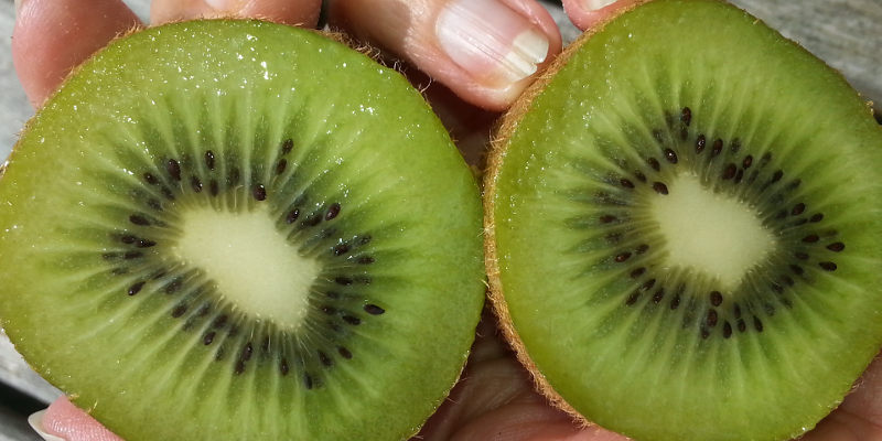 Kiwi ou actinidia Hayward