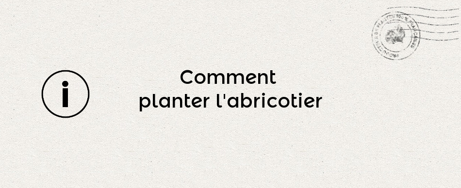 Comment planter l'abricotier