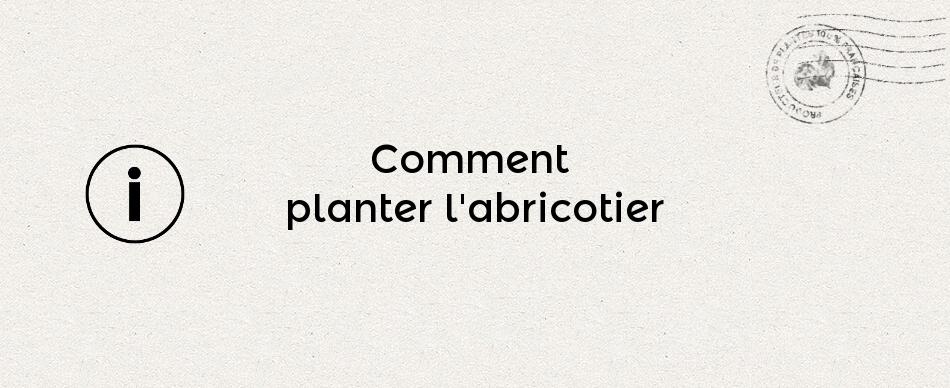 Comment planter l'abricotier