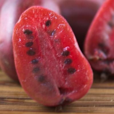 Kiwi, Kiwai ou actinidia Purpurea