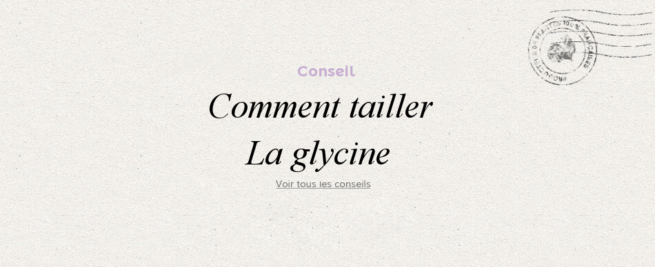 Comment tailler ma glycine