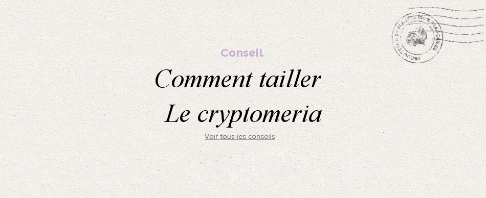 Comment tailler le cryptomeria